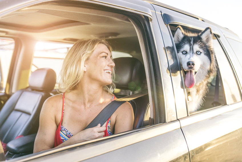 How to Protect Pets While Driving