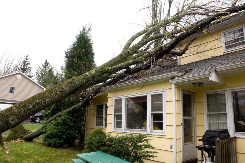 Are Trees Covered By Insurance?