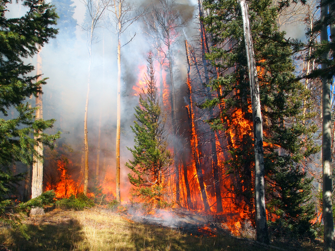Protecting Your Property From Wildfires